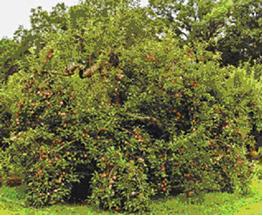 Find A Farm - Pumpkin Patch