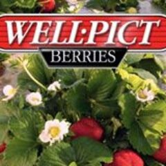Well-Pict Berries