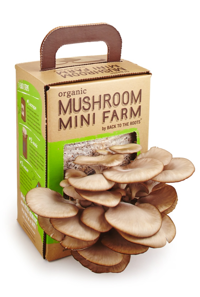 Mushroom kit on white (2)