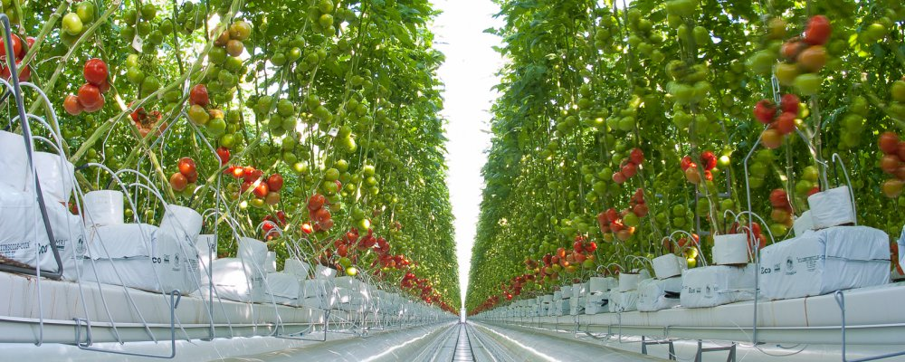 Farming all year-round with GREENHOUSES!