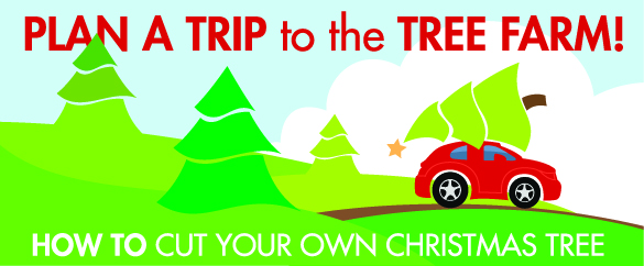 Top 25 Festive, Tree Farms to find the Perfect Christmas Trees!