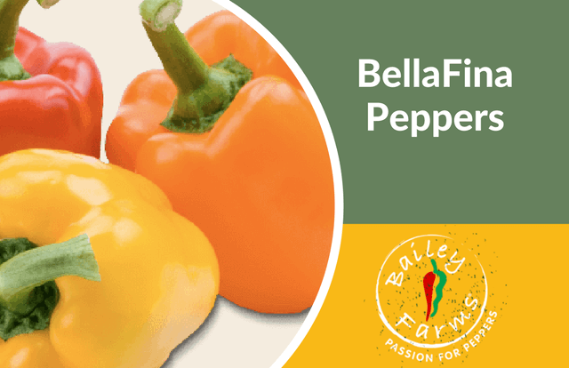 BellaFina Peppers