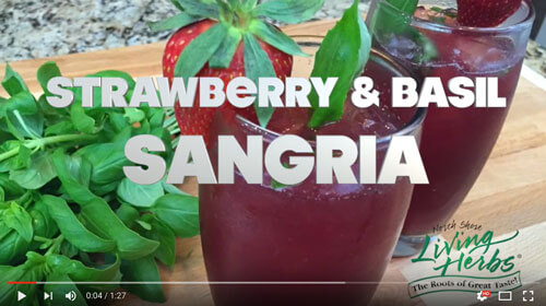 Living Herbs Strawberry & Basil Sangria
