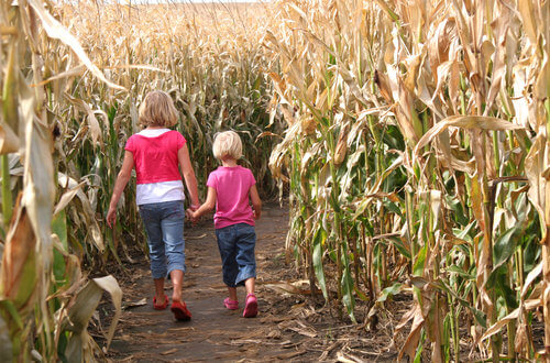 Two children spending an autumn walk together. (Entering a corn maze).