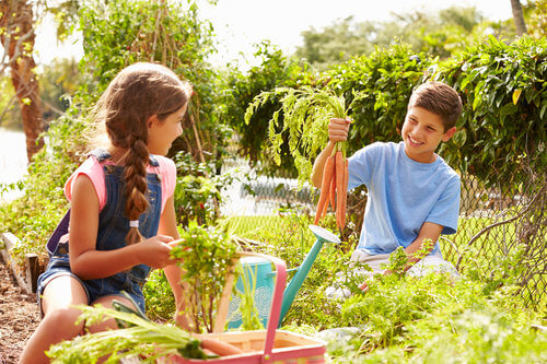 Two Children Working On Allotment Together