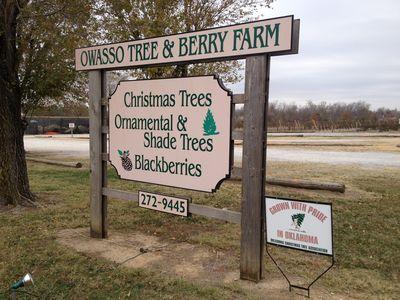Plan a Trip to the Christmas Tree Farm!
