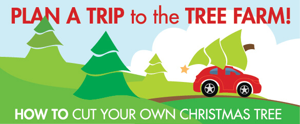 Take A Trip to the Tree Farm!