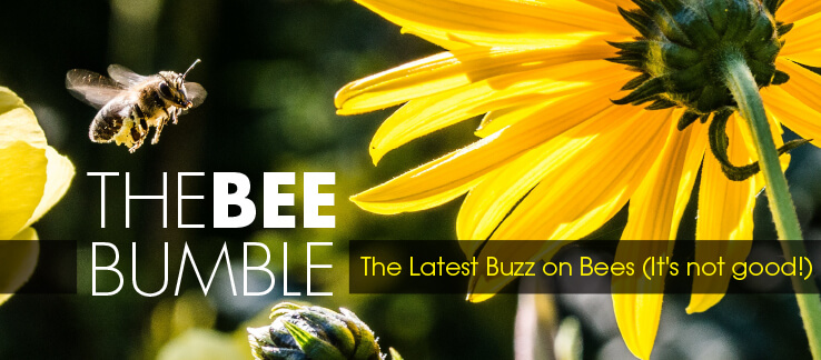 The Bee Bumble. It's not great buzz on the state of our BEES!