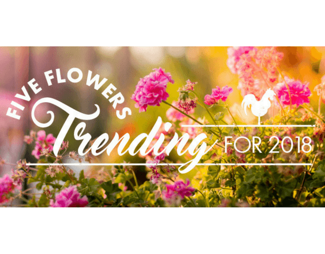 5 Flowers On Trend in 2018!