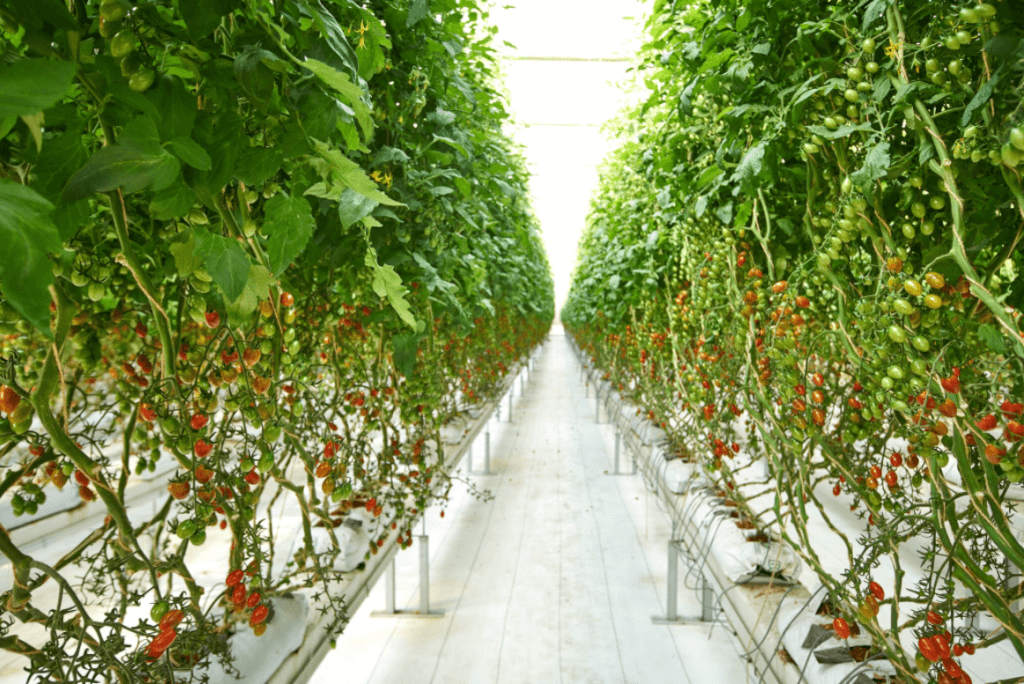 Greenhouses - Why I am Buying More of This Type of Food