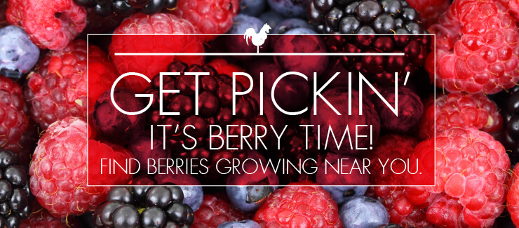 Get 'Berry' Excited! Here's What's in Season!
