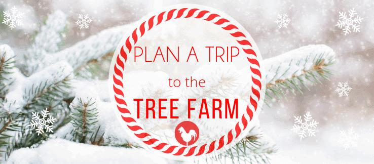Plan a Trip to the TREE FARM!