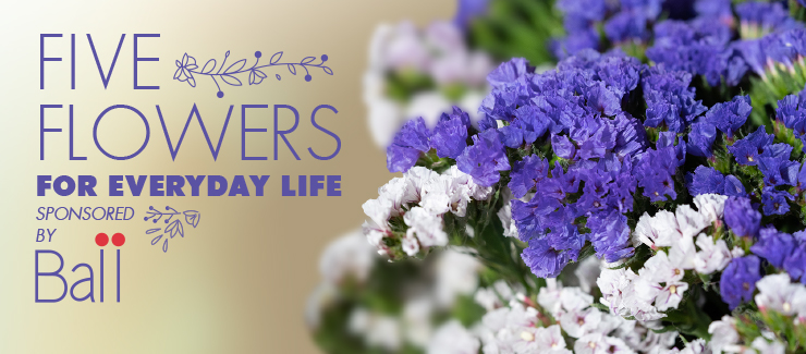 Everyday Flowers for Everyday Life