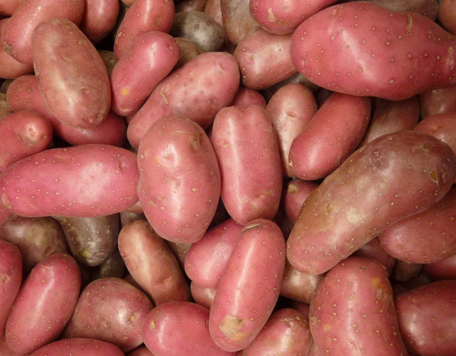 Klondike Rose® Potatoes