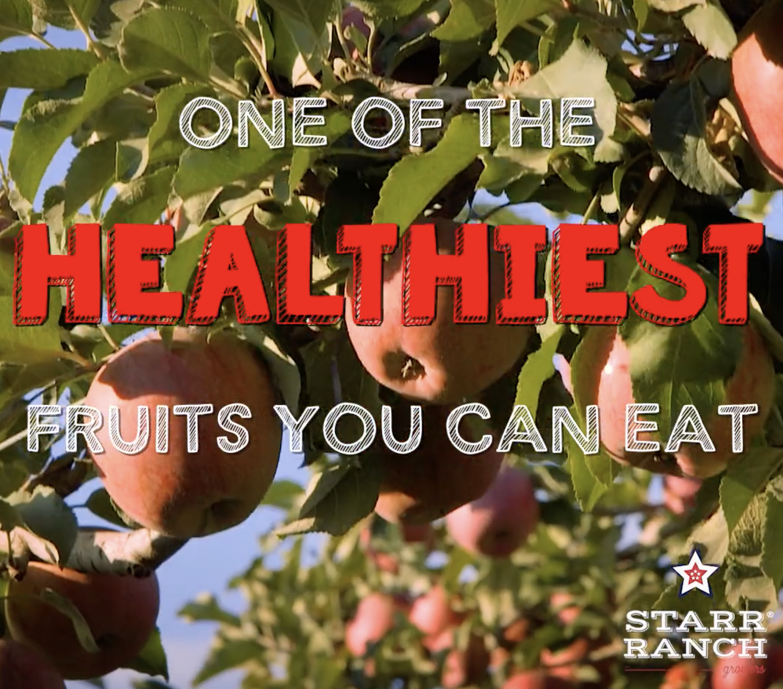 Starr Ranch Growers: Healthy Fruit