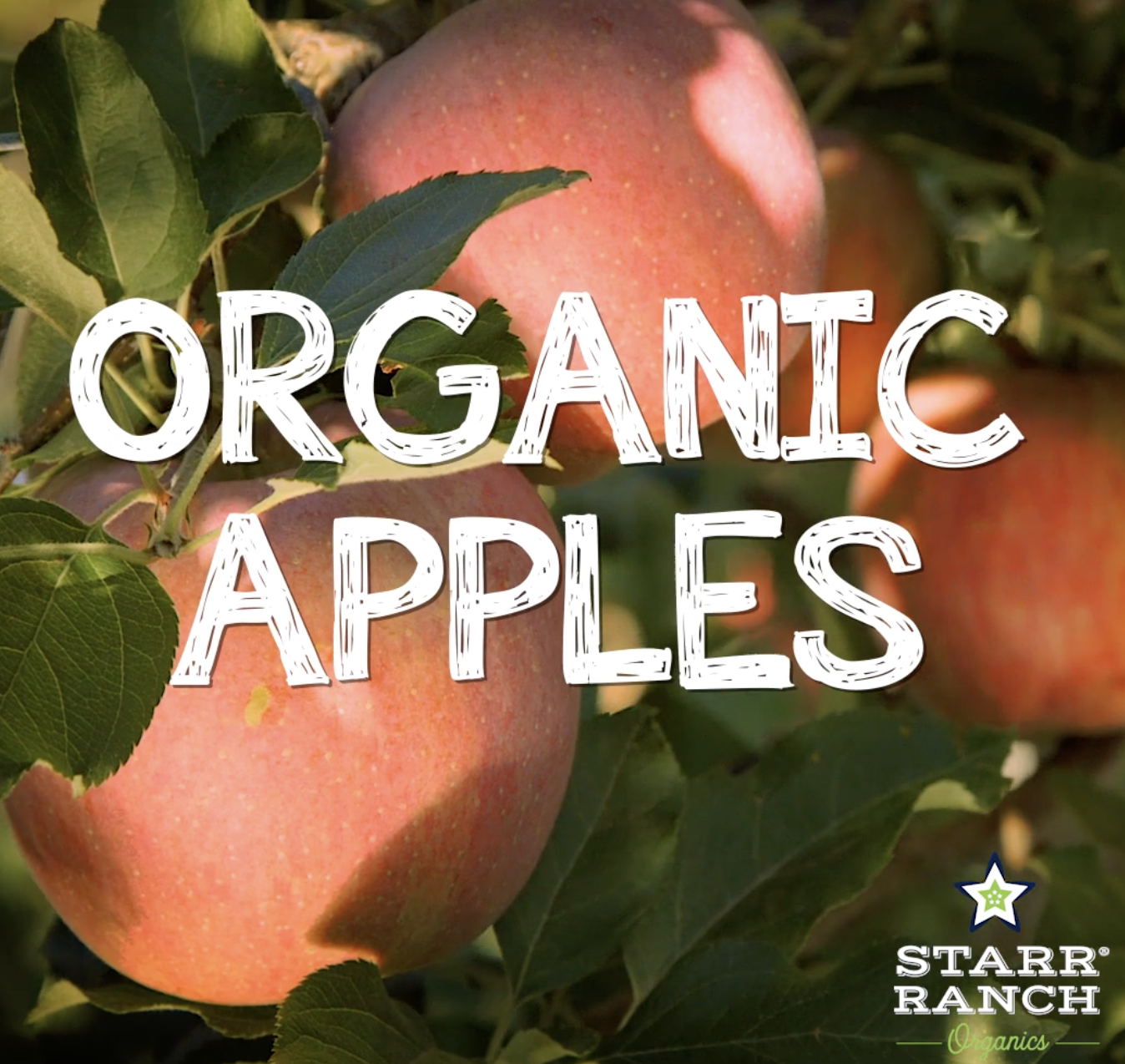 Starr Ranch Growers: Organic Apples