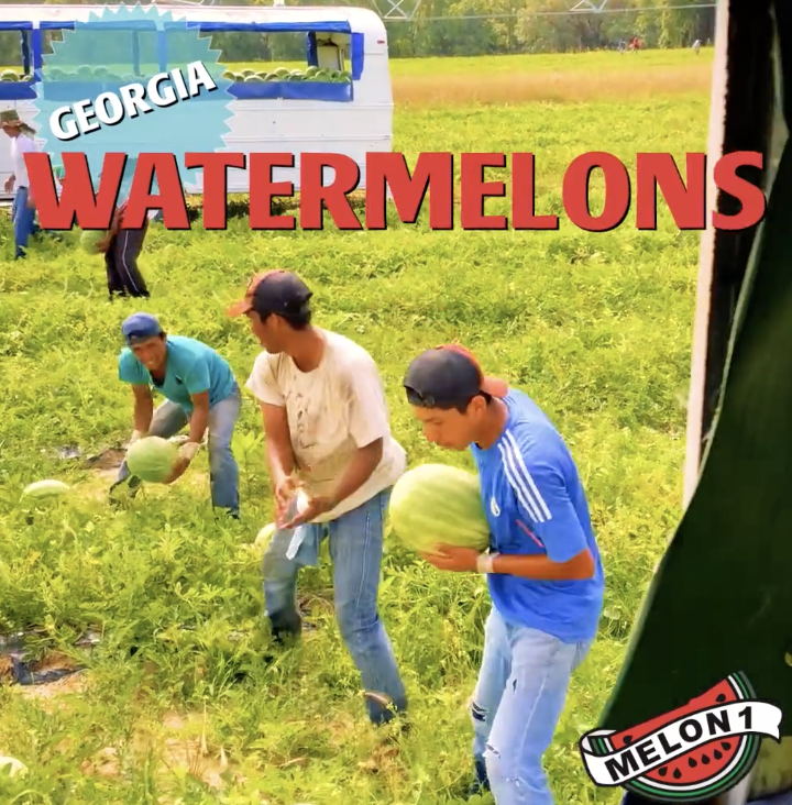 Melon 1: Georgia Watermelons