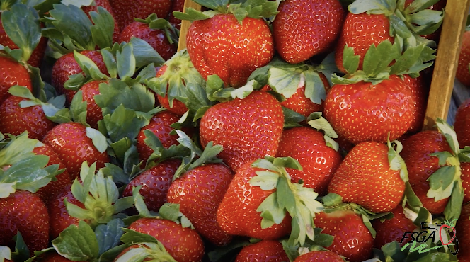 FSGA: Strawberry Varieties