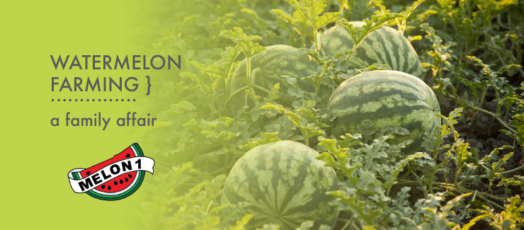 Watermelons from Melon 1 - the heart of summer!