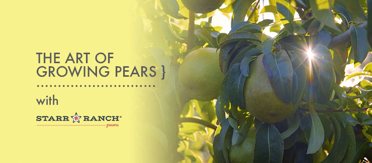 The Art of Growing Pears